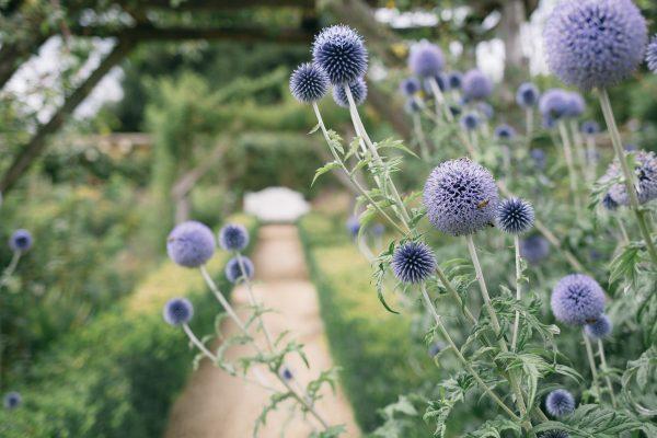 Flowers frame the beginning of a garden path