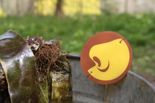 Part of a sensory trail with a symbol of a nose next to some seaweed