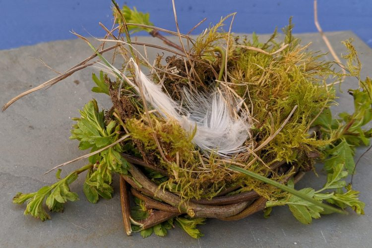 making a birds nest activity sensory trust