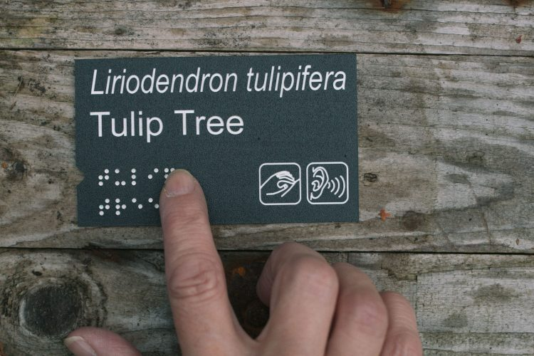 Plant label with addition of Braille and Widgits