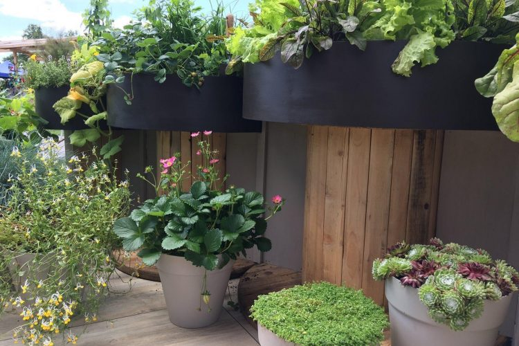 plants and vegetables grown at different heights