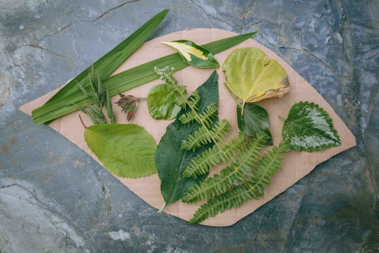 home made nature palette activity