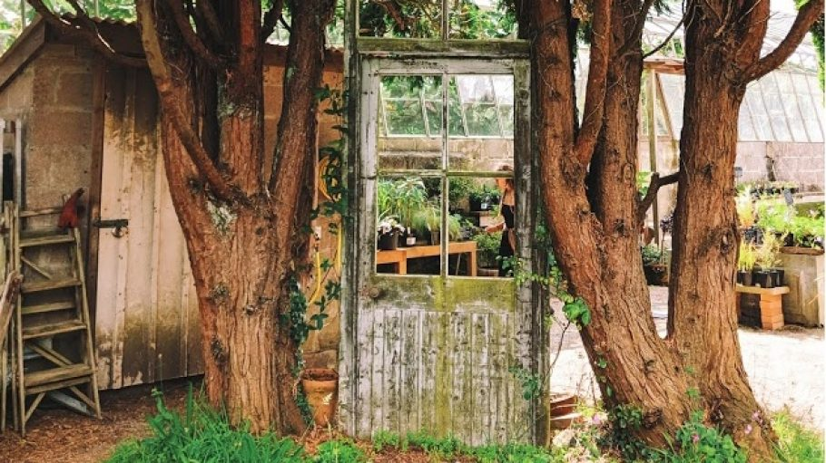 An old door sandwiched between trees