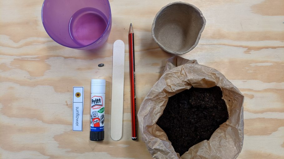 Materials ready for a sunflower growing activity